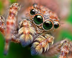 do-spiders-have-good-eyesight